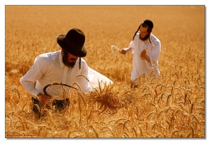 The Harvest of Golden Grain